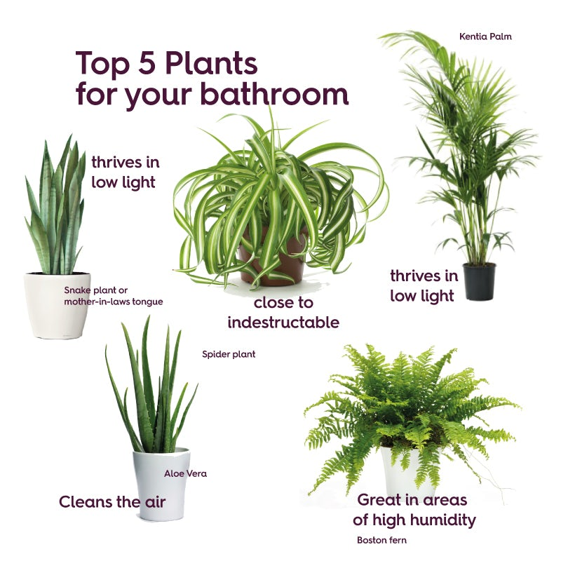 Best plants for bathrooms